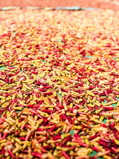 Cloves drying in Zanzibar